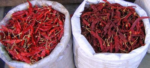 Indija, indijska hrana, čili, hindujska poroka, hinduizem, potovanje, popotniški blog