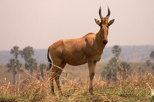 Afrika, Uganda, potovanje, popotniški blog, narodni park Murchison Falls