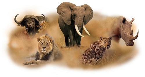 Afrika, Uganda, safari, beli nosorog, zavetišče za nosoroge, Ziwa, potovanje, popotniški blog
