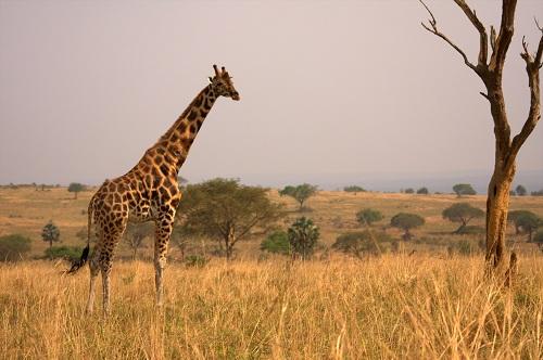 Afrika potovanje, potovanje v Afriko