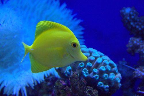 dubaj znamenitosti, znamenitosti v dubaju, dubaj akvarij, akvarij v dubaju, dubaj počitnice, dubaj cene