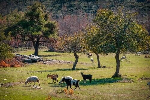 otok Thassos, Thassos grčija, Grčija počitnice