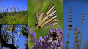 Sivka,hrvaška, Kras, Francija, popotniški blog, potovanje