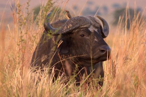Afrika, Uganda, safaari, Kidepo, potovanje, popotniški blog