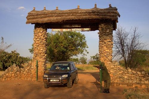 Afrika, Uganda, safari, Kidepo, potovanje, popotniški blog