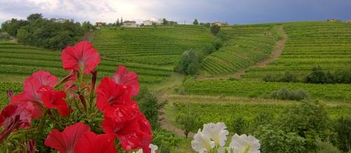Domačija Kabaj Morel, vina Kabaj Morel, Goriška Brda, izlet po Sloveniji, izlet v Goriška Brda, Goriška Brda znamenitosti, hrana v Goriških Brdih