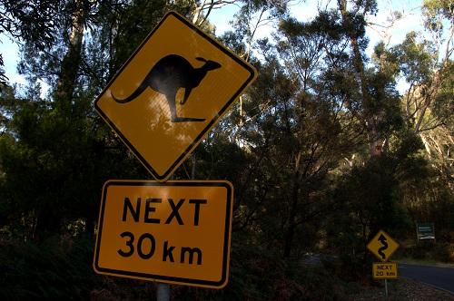 narodni park grampians, grampians avstralija, kenguruji, kenguruji v Avstraliji, Avstralija znamenitosti, Avstralija potovanje