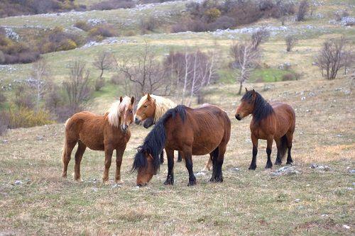 Velebit, Velebit Hrvaška, Severni Velebit, kam na izlet