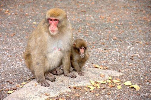 makaki opice, opicemakaki, ideja za izlet,kam na izlet, enodnevni izlet, družinski izlet