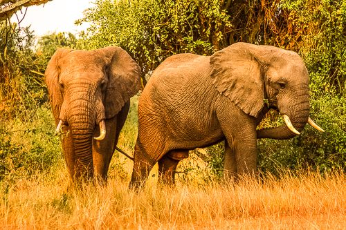 Uganda potovanje, potovanje v ugando, afrika potovanje