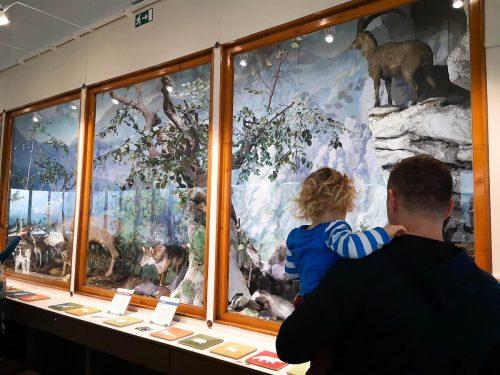 kam na izlet, ideja za izlet, prirodoslovni muzej slovenije