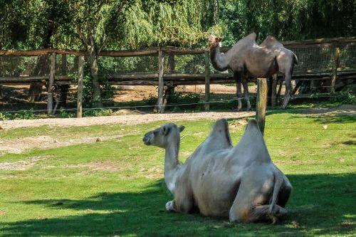 Živalski vrt Herberstein